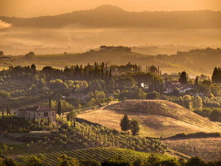 agriturismo: Cypress on the Hills of Tuscany on a Foggy morning