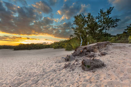 shifting: Dunes with shifting Sands in Korte Duinen Nature reserve near Soest, Netherlands
