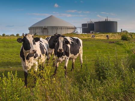ファームの牛の糞の処理の生物ガスのインストール