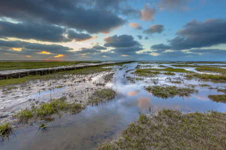 salt marsh: Reclaimed land on the Groningen coast in a tidal salt marsh of the Waddensea, Netherlands Stock Photo