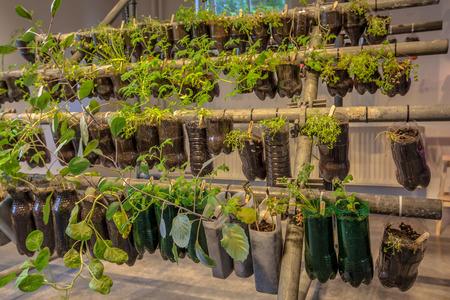 Cesti appesi Organic orto fatta di bottiglie di plastica all'interno di una casa Archivio Fotografico - 41097356