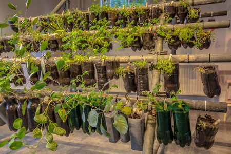Organic Hanging baskets vegetable garden made of plastic bottles inside a home
