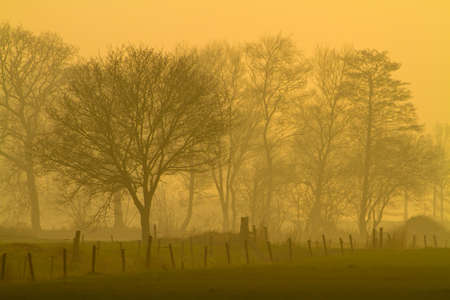 abstruse: Mysterious foggy landscape with fence and trees in orange afternoon glow Stock Photo