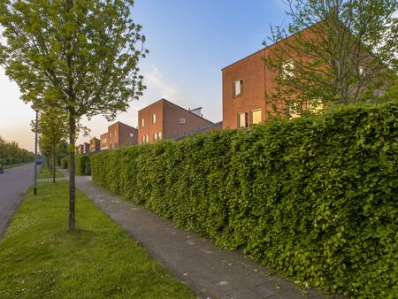 hedgerow: Suburban street with pavement and hedgerow in the Netherlands