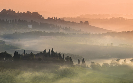 val d'orcia: Cypress on the Hills of Tuscany on a Foggy morning