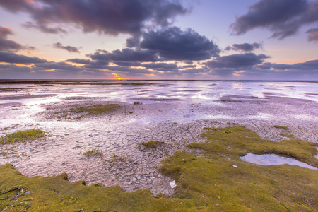 reclaimed: Land being reclaimed on the Groningen coast in a tidal salt marsh of the Waddensea, Netherlands Stock Photo