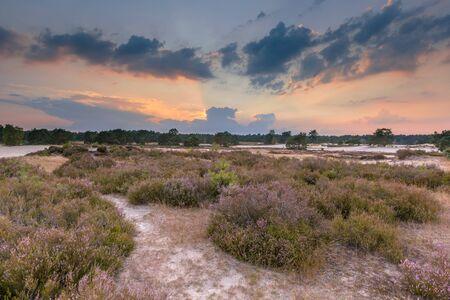shifting: Shifting sands and heathland in Soesterduinen nature reserve on the Utrechtse Heuvelrug, Netherlands Stock Photo