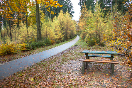 picknick: Picknick Bench in a Yellow Golden Autumnal Forest