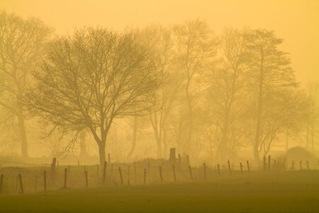 abstruse: Mysterious misty landscape with fence and trees in orange afternoon glow