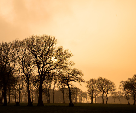puzzling: Puzzling misty landscape with trees in orange afternoon glow Stock Photo