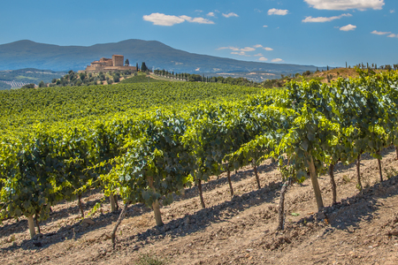 Castle Overseeing Vineyards with  Rows of grapes from a Hill on a Clear Summer Day