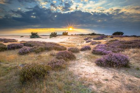 Heide en zandverstuivingen in Nationaal Park De Hoge Veluwe rond zonsondergang onder een bewolkte hemel in augustus