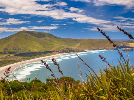 littoral: Coastal view of Wickliffe bay Pacific coast of New Zealand, Otago Peninsula