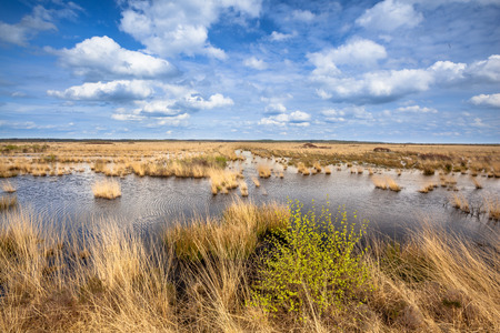 natura: Landscape image of raised bogs in Natura 2000 nature reserve Fochtelooerveen on the border of Drenthe and Friesland, Netherlands