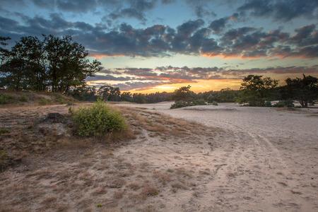 Dune zone avec des sables mouvants en réserve naturelle près de Korte Duinen Soest, Pays-Bas Banque d'images - 48934873