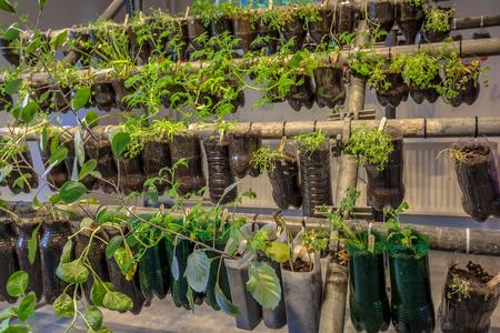 plastico pet: Cestas colgantes huerta hecha de botellas de plástico dentro de una casa