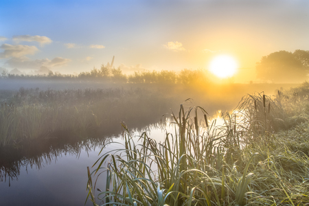 broadleaf: Hazy sunrise over River in dutch countriside with broadleaf cattail (Typha latifolia) on riverbank in the foreground.
