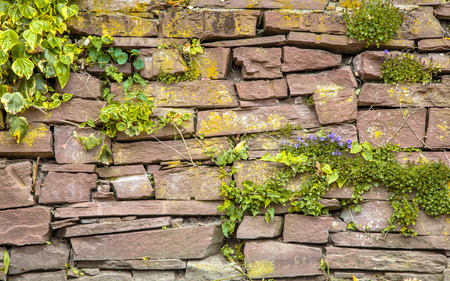 Muur vegetatie Stone Achtergrond met planten en bloemen