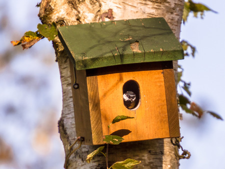 Nesting box with bird inside inspecting its new house Stock Photo