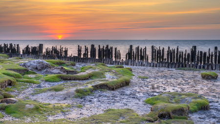 salt marsh: Tidal salt marsh in Natura 2000 area Waddensea on the coast at Peassens Moddergat Stock Photo