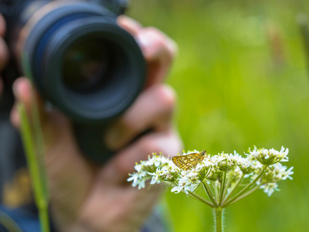 outdoor pursuit: Macro Photographer taking a photo of an insect. Nature Photography has become  a popular outdoor pursuit since digital cameras became available