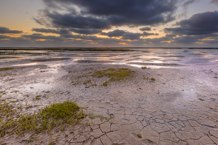 reclamation: New land being created in the mud-flats of a tidal marsh in the Waddensea on the Groningen coast in the Netherlands
