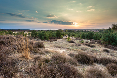 veluwe: Sunset over Heather and sand on the Ginkelse Hei in Planken Wambuis, Veluwe, Netherlands during Sunset