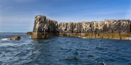 roosting: Seabird colonies on the cliffs of Farne islands, Northumberland, United Kingdom