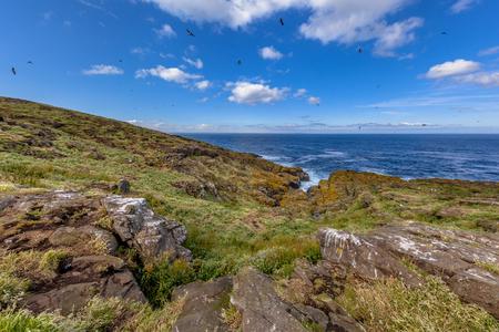 fratercula: Seabird colonies on the Isle of May, Scotland