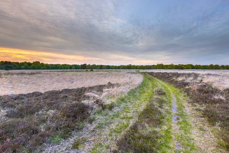 posbank: Sunset over heathland of Ballooerveld near Assen, Drenthe, The Netherlands