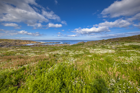 Vegetation and Seabird colonies on the Isle of May, Scotland Stock Photo