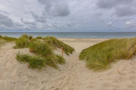 texel: Track throug the dunes to the beach on a wadden island in the Netherlands