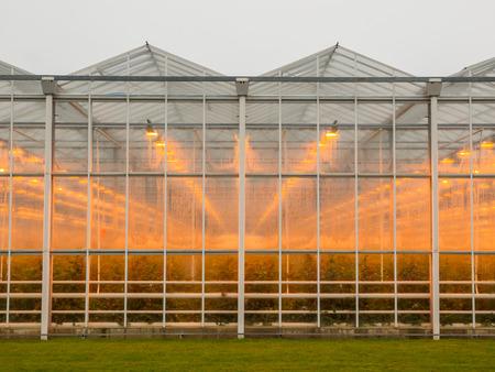 moist: Warm light through moist glass of a giant commercial glasshouse