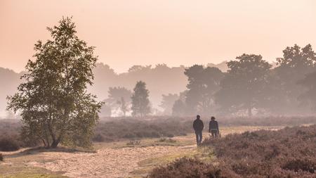 veluwe: Panorama of Couple strolling along path through heathland on a morning in october under autumn light. Otterlo, Hoge Veluwe, the Netherlands