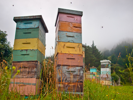 beekeeping: Colorful Wooden Beehives in Mountainious Countryside with Bees Swarming around