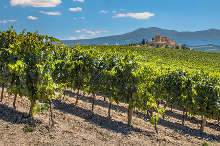sauvignon blanc: Castle Overseeing Vineyards with  Rows of grapes from a Hill on a Clear Summer Day