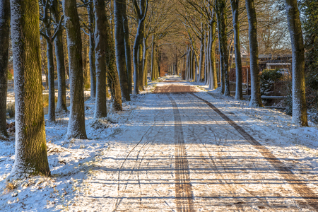 Slippery frozen country road with light snow tree lane in the Netherlands