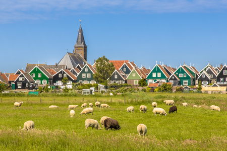 Colorful wooden houses and church in Dutch Village with sheep on the foreground on the island of Marken in the Ijsselmeer or formerly Zuiderzee, the Netherlands