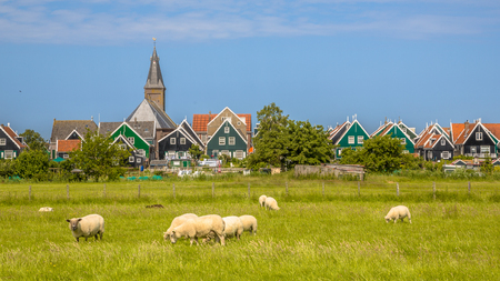 Panorama of Traditional dutch Village with colorful wooden houses and church with sheep on the foreground on the island of Marken in the Ijsselmeer or formerly Zuiderzee, the Netherlands