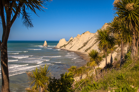 cordyline: Cape Kidnappers with cabbage trees (Cordyline australis) in front, Napier, New Zealand