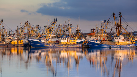 Fishery at Lauwersoog which hosts one of the biggest fishing fleets in the Netherlands. The fishery concentrates mainly on the catch of mussels, oysters, shrimp and flatfish in the Waddensea Stock Photo