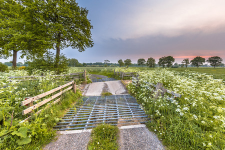 cattle grid: Cattle grid decorated with Cow Parsley (Anthriscus sylvestris) flower on a summer evening in may Stock Photo