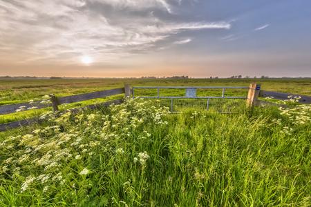 Hazy sunset over fence in dutch polder landscape near Zuidlaren