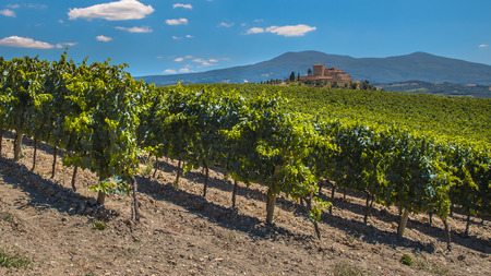 Tuscan Castle Overseeing Vineyards with  Rows of grapes from a Hill on a Clear Summer Day