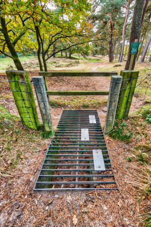 cattle grid: Entrance to nature reserve with wildlife cattle grid