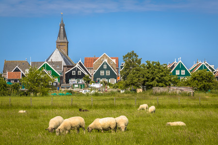 marken: View of Traditional dutch Village with colorful wooden houses and church with sheep on the foreground on the island of Marken in the Ijsselmeer or formerly Zuiderzee, the Netherlands