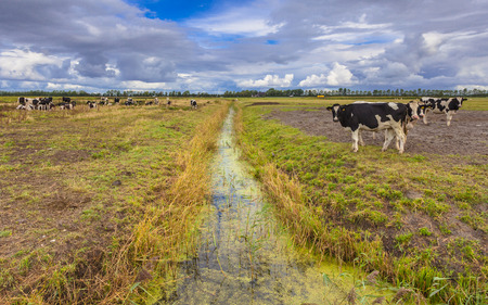 dutch typical: Typical Dutch Landscape with Meadows, Water and Clouds Stock Photo
