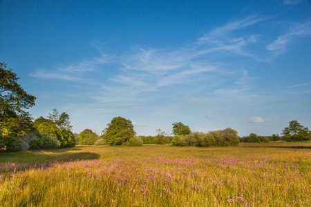 Natural Grassland with Many Wildflowers in Nature Reserve Elperstroom, Drenthe, Netherlands Stock Photo