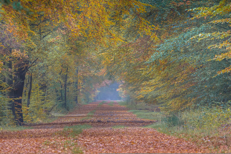 assen: Autumn lane with Beech trees (Fagus sylvatica) with colorful leaves in orange yellow and brown colors