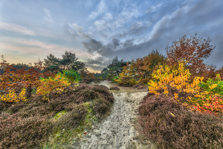 Trail rhrough Autumnal heathland landscape with colorful leaves on trees in Drenthe, Netherlands